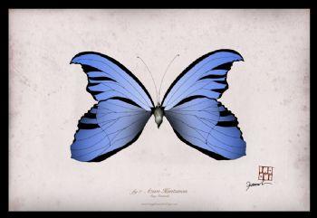 Azure Huntsman - signed print